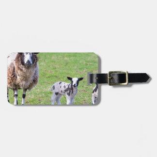 Etiqueta De Bagagem Sira de mãe a carneiros com os dois cordeiros