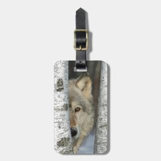 Etiqueta De Bagagem Tag da bagagem com a foto do lobo cinzento em