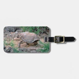 Etiqueta De Bagagem Tag da bagagem da tartaruga de Galápagos