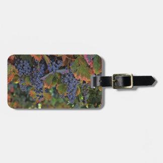 Etiqueta De Bagagem Tag da bagagem das uvas para vinho do vinhedo