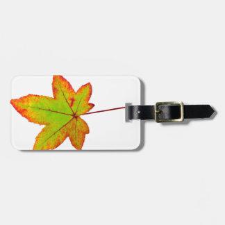 Etiqueta De Bagagem Uma folha de bordo colorida no outono no branco