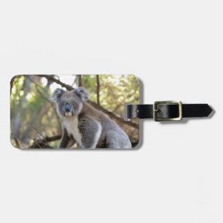 Etiqueta De Bagagem Urso de Koala cinzento e branco