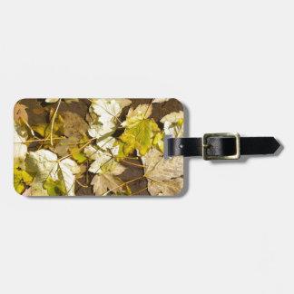 Etiqueta De Bagagem Vista superior das folhas de bordo molhadas de um