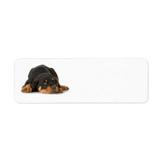Etiqueta de endereço de Rottweiler