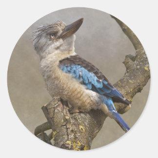 Etiqueta de Kookaburra