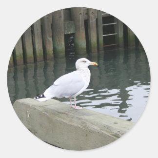 Etiqueta de solo do albatroz