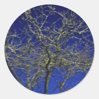 Etiqueta desencapada da árvore