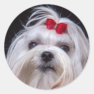 Etiqueta do cão de brinquedo branco pequeno maltês