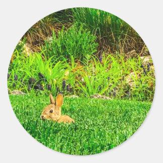Etiqueta do coelho de coelho