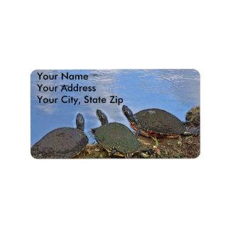 Etiqueta do enviamento da tartaruga etiqueta de endereço