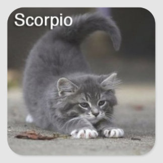 Etiqueta do gato da Escorpião Adesivo Quadrado