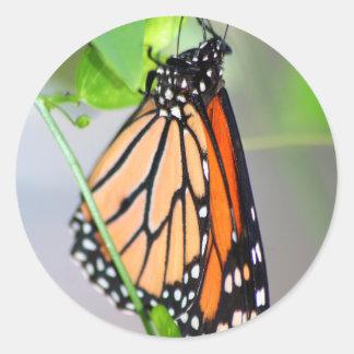 Etiqueta do monarca de Magnifico
