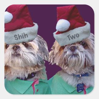 Etiqueta do Natal de Shih Tzues Shih dois Adesivo Em Forma Quadrada