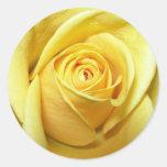 etiqueta do rosa amarelo adesivos redondos
