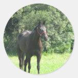 Etiqueta escura do cavalo de baía adesivos redondos