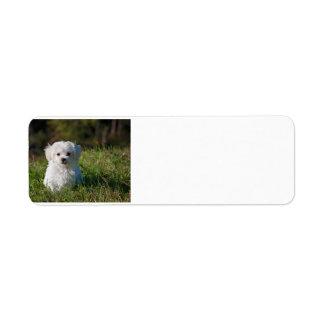 Etiqueta filhote de cachorro maltês na grama