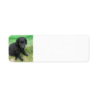 Etiqueta filhote de cachorro revestido encaracolado do