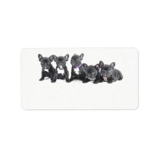 Etiqueta Filhotes de cachorro bonitos do buldogue francês