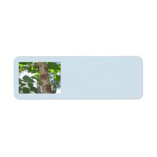 Etiqueta folhas do verde e tronco de árvore com latido