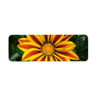 Etiqueta Foto alaranjada bonita da flor de Sun