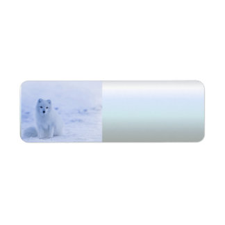 Etiqueta Fox ártico de Islândia