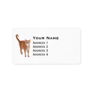 Etiqueta Gato de gato malhado alaranjado