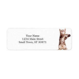 Etiqueta Gato ereto - gatinho - animal de estimação -