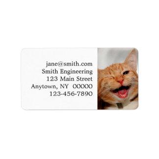 Etiqueta Gato que pisc - gato alaranjado - gatos engraçados