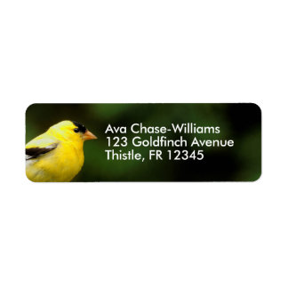 Etiqueta Goldfinch americano masculino no bambu