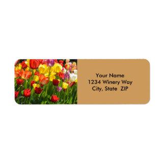 Etiqueta Jardim da tulipa na primavera