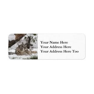 Etiqueta Leopardo de neve curioso na neve
