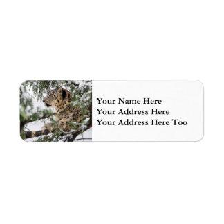 Etiqueta Leopardo de neve sob Bush nevado