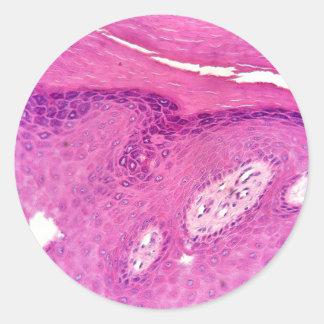 Etiqueta microscópica da fotografia do tecido da