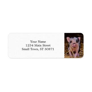 Etiqueta mini porco