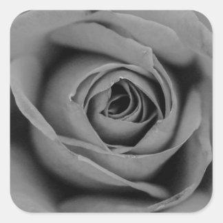 Etiqueta monocromática do rosa