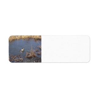 Etiqueta natação de akita