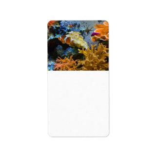 Etiqueta oceano do coral dos peixes do recife