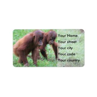 Etiqueta Orangotango