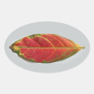 Etiqueta oval da folha vermelha bonito, aferidor,