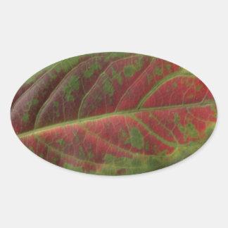Etiqueta oval do close up vermelho da folha,