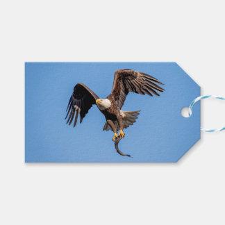 Etiqueta Para Presente Águia americana com um peixe