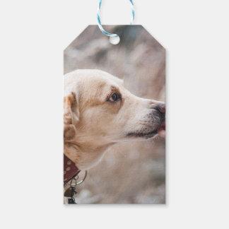 Etiqueta Para Presente cão
