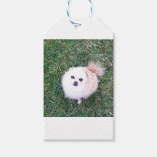Etiqueta Para Presente Cão bonito
