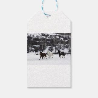 Etiqueta Para Presente Cavalos selvagens