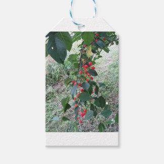 Etiqueta Para Presente Cerejas vermelhas de Montmorency na árvore no