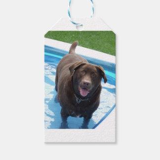 Etiqueta Para Presente Chocolate Labrador que tem o divertimento em uma