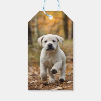 Etiqueta Para Presente Filhote de cachorro de labrador retriever