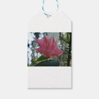 Etiqueta Para Presente fim do rosa da trombeta dos anjos 205a