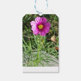 Etiqueta Para Presente Flor cor-de-rosa escura da margarida do cosmos