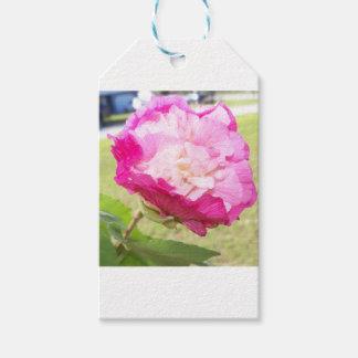 Etiqueta Para Presente flor variável do rosa e a branca do hibiscus